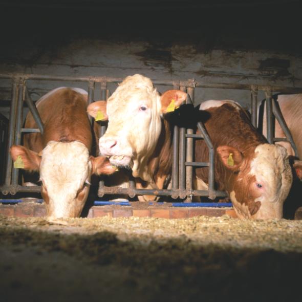 Ehrsam-Bauernhof-Direktvermarktung-Coburg